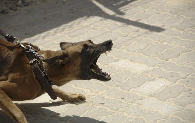 angry-dog-bite-utah-legal